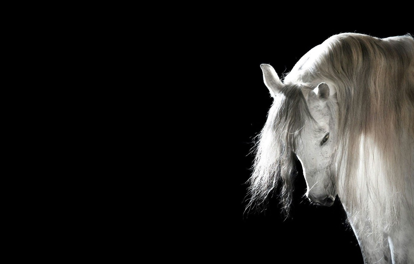 Wallpaper Horse Mane Black Background White Horse Images For Desktop Section Zhivotnye Download