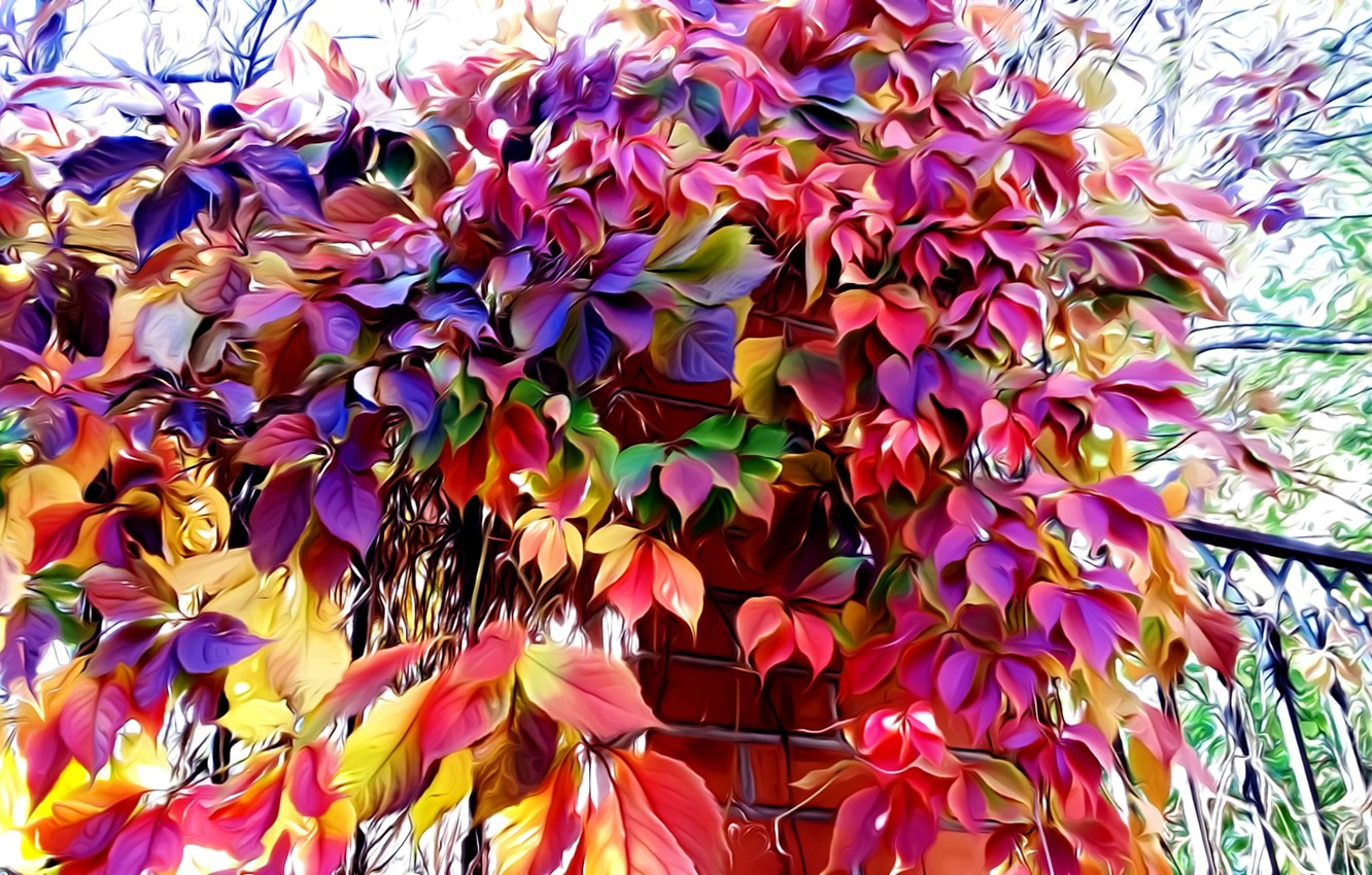 Photo wallpaper rendering, fence, picture, autumn leaves, wild grapes, fall colors, brickwork
