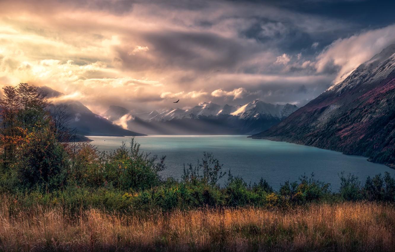 Photo wallpaper autumn, grass, light, mountains, fog, lake, bird, tops, haze, the bushes, pond