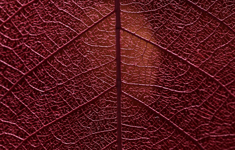 Photo wallpaper macro, sheet, veins