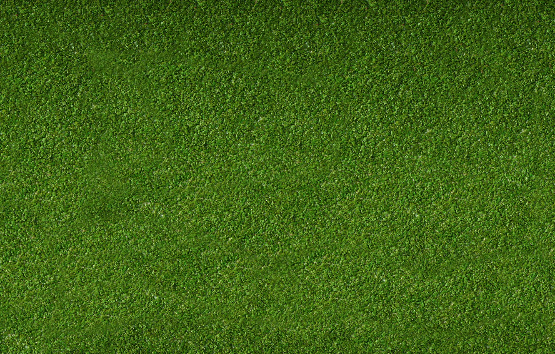 Photo wallpaper Greens, Grass, Lawn