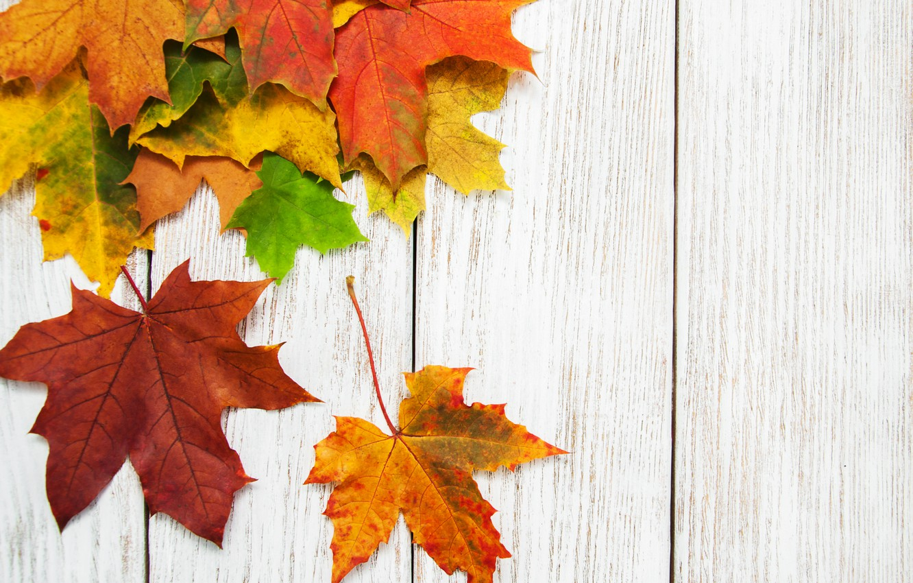 Photo wallpaper autumn, leaves, background, colorful, rainbow, maple, wood, autumn, leaves, maple