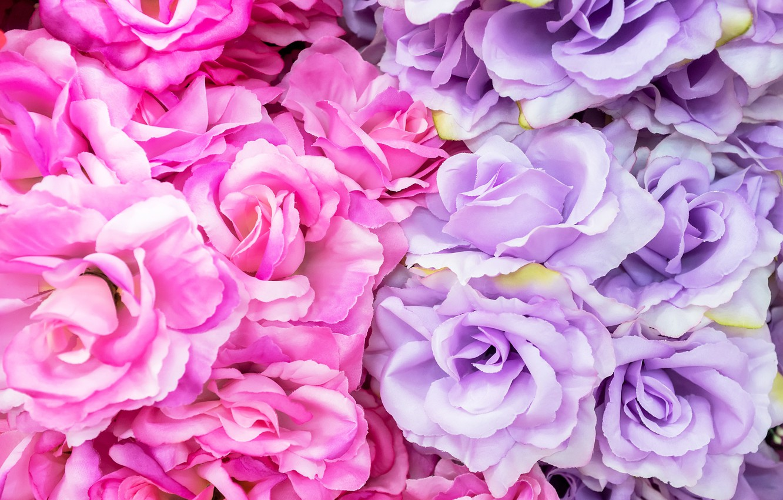 Photo wallpaper flowers, roses, pink, flowers, roses, violet