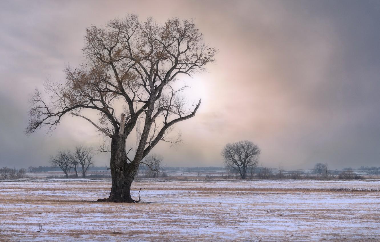Photo wallpaper winter, field, tree