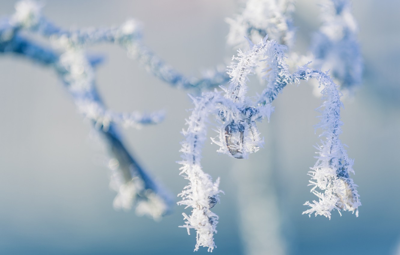 Photo wallpaper winter, frost, macro, nature, branch, frost
