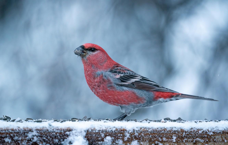 Photo wallpaper winter, bird, Schoor