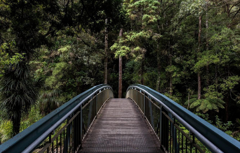 Photo wallpaper greens, forest, summer, trees, bridge, nature