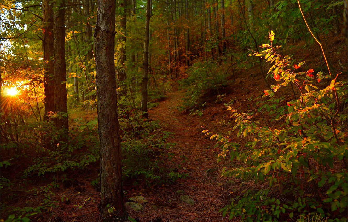 Photo wallpaper Autumn, Trees, Forest, Trail, Autumn, The Rays Of The Sun, Forest, Trees