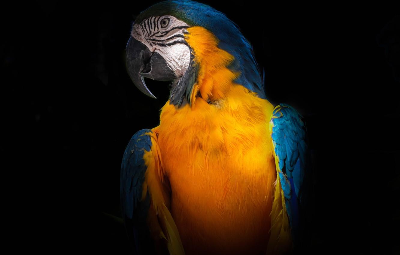 Photo wallpaper Bird, Tropical, Animal