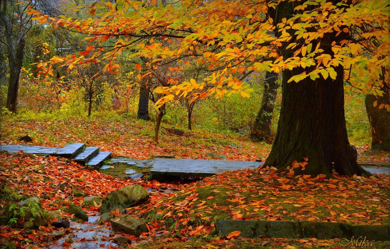 Photo wallpaper Autumn, Trees, Park, Fall, Foliage, Park, Autumn, Trees