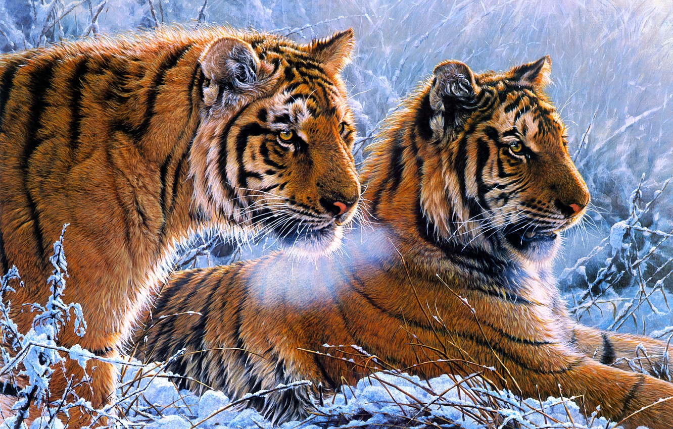 Photo wallpaper cold, winter, frost, look, snow, tiger, picture, art, pair, couples, painting, tigers, two, muzzle, Alan …