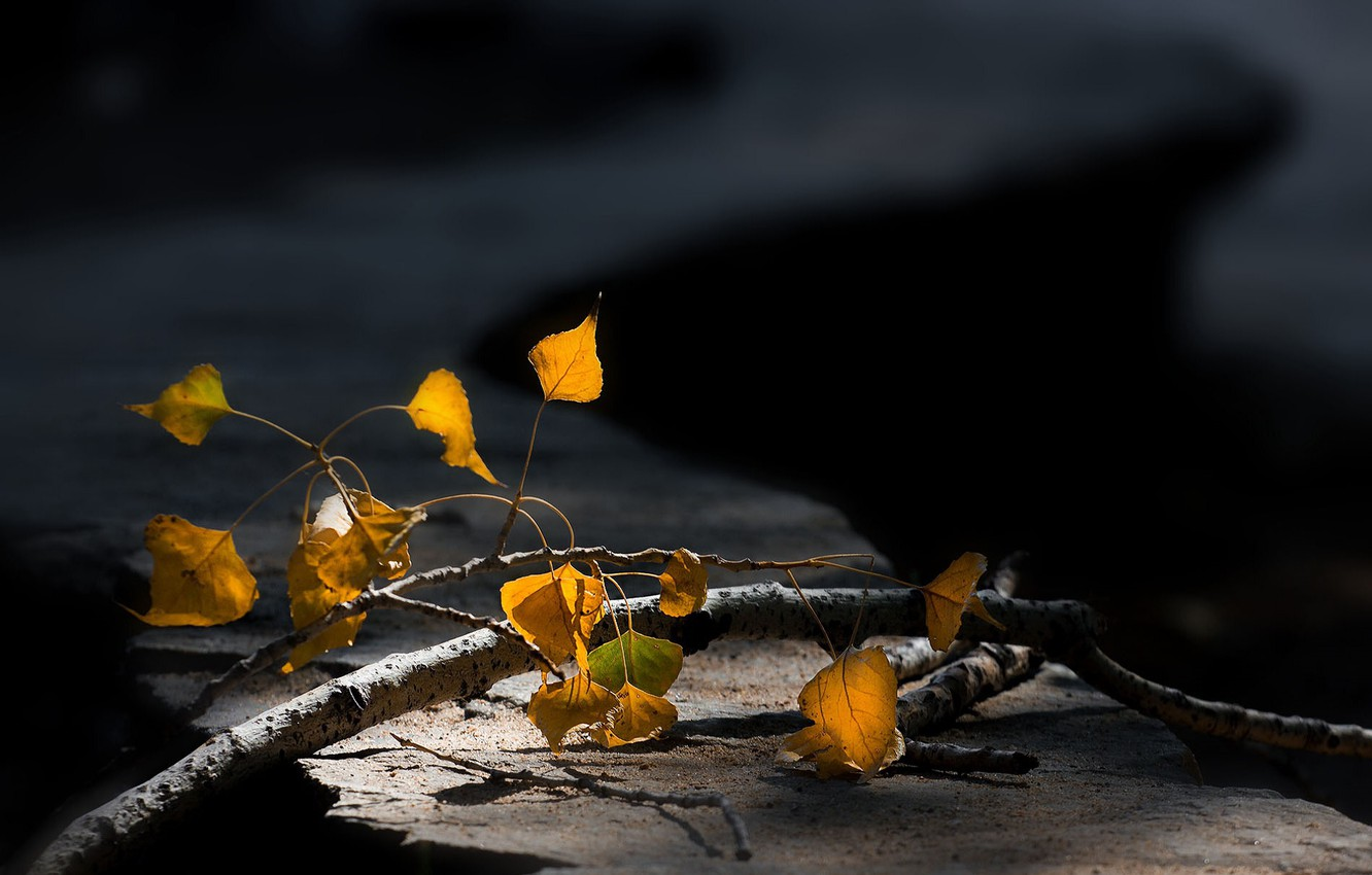 Photo wallpaper branch, blurred background, autumn leaves