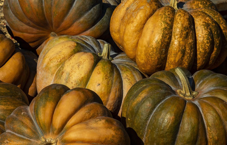 Photo wallpaper Canada, Ontario, Green and Orange Pumpkins, Halton, Springridge Farm