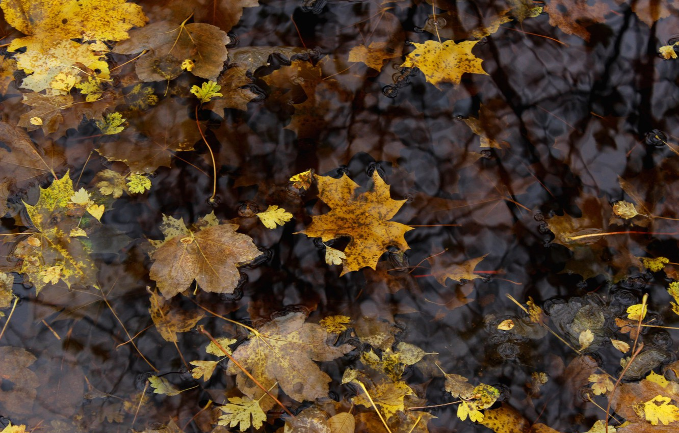 Photo wallpaper leaves, Autumn, puddle