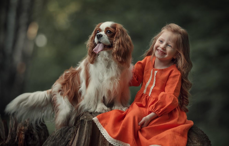 Photo wallpaper joy, nature, animal, stump, dog, girl, child, dog, Spaniel, Julia Kubar