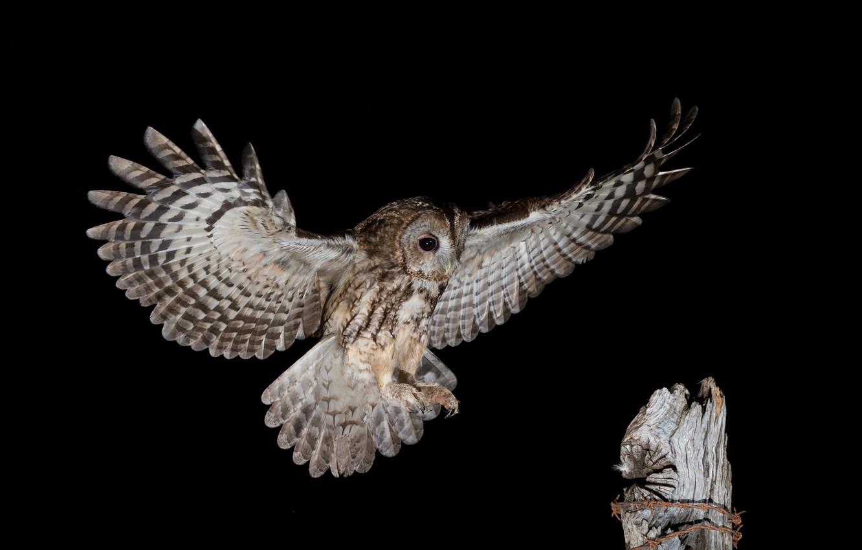Wallpaper night, owl, soars images for desktop, section