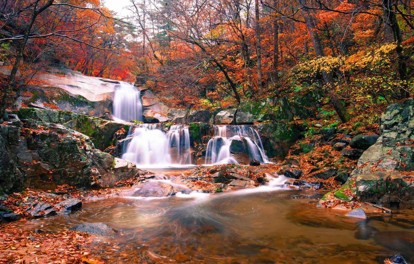 Photo wallpaper forest, landscape, river, rocks, waterfall, summer, forest, river, landscape, beautiful, autumn, leaves, waterfall