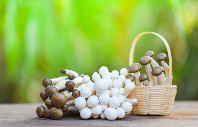 Photo wallpaper green, table, background, mushrooms, food, blur, hats, the beam, white, mushrooms, basket, brown, bokeh, mushrooms, …