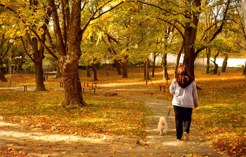 Photo wallpaper Autumn, Dog, Park, Fall, Park, Autumn, Walk