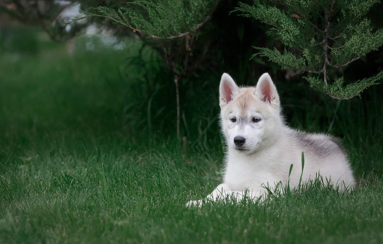 Photo wallpaper white, grass, look, branches, nature, pose, green, Park, background, dog, baby, cute, puppy, lies, face, …