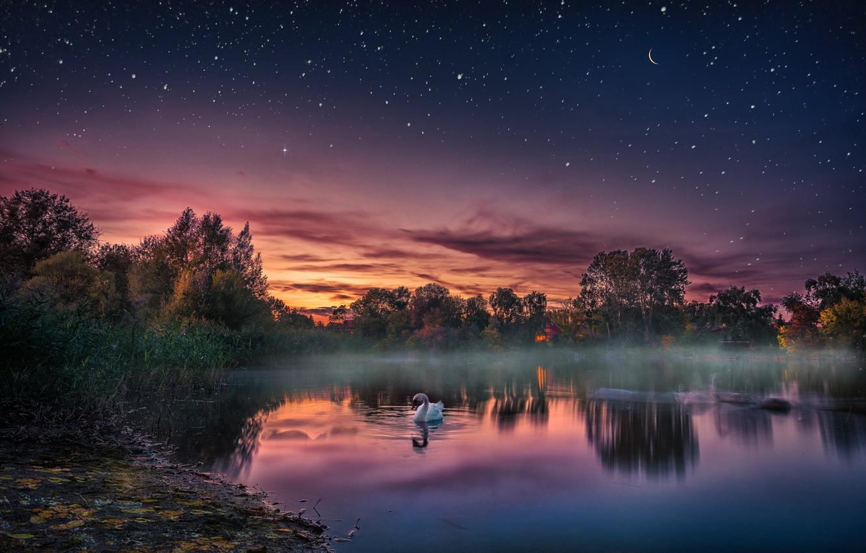Photo wallpaper sunset, lake, bird, the evening, Swan, starry sky