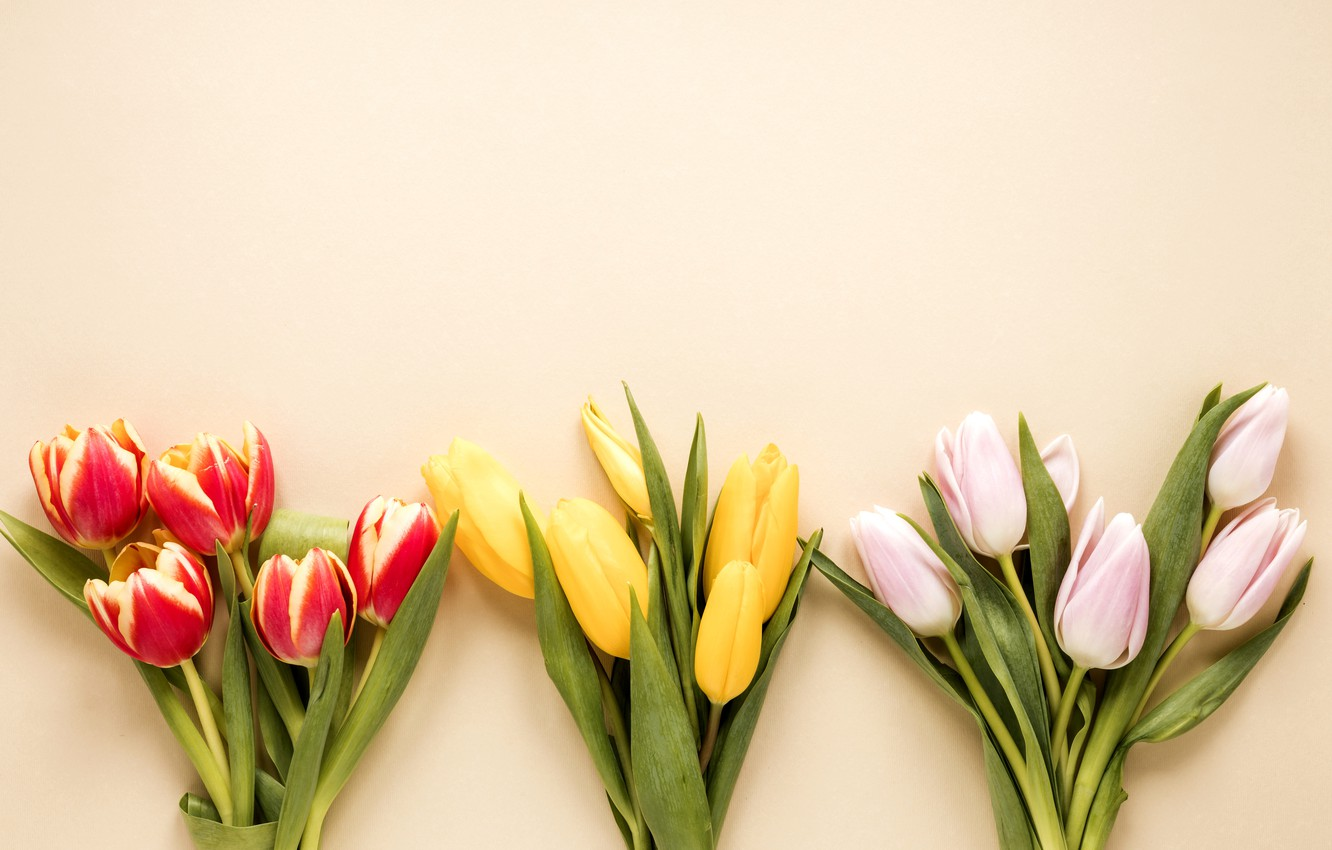 Photo wallpaper flowers, bouquet, colorful, tulips, flowers, tulips, spring