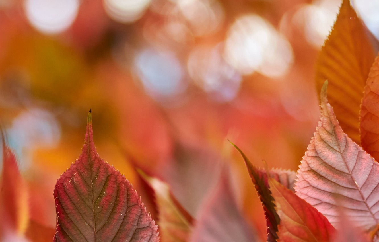 Photo wallpaper autumn, leaves, macro