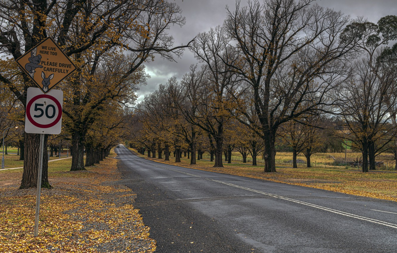 Photo wallpaper Australia, NSW, Armidale, Elm Avenue, University of New England