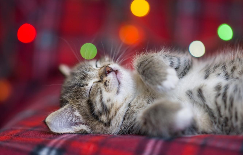 Photo wallpaper kitty, fluffy, sleeping, bokeh, Eygenei Eg