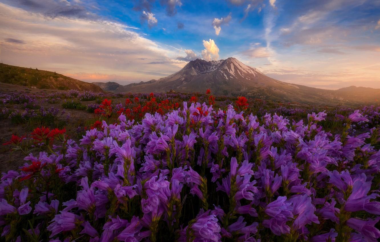 Photo wallpaper field, the sky, flowers, hills, Doug Shearer