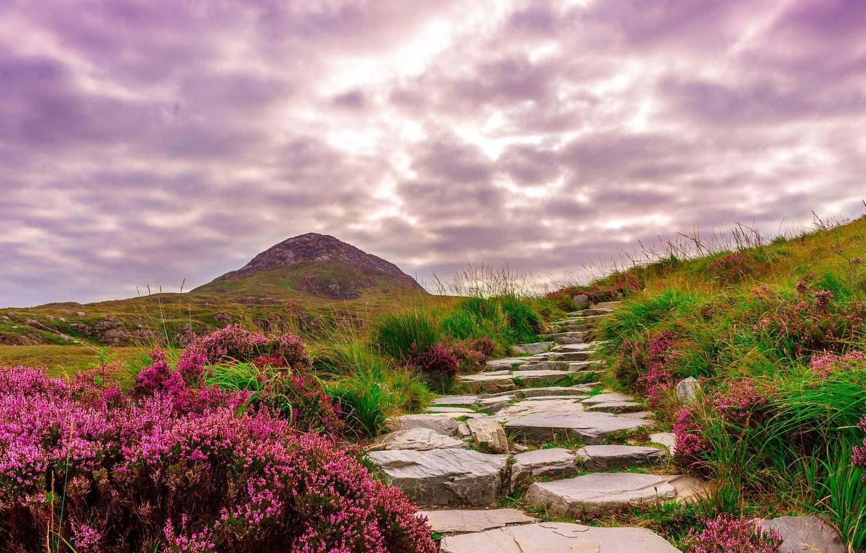 Photo wallpaper road, flowers, Ireland, mountains.