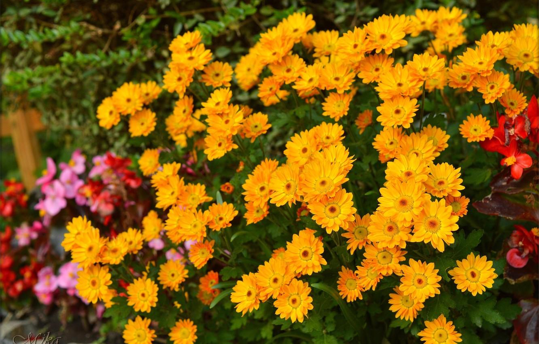Photo wallpaper Flowers, Yellow flowers, Yellow flowers