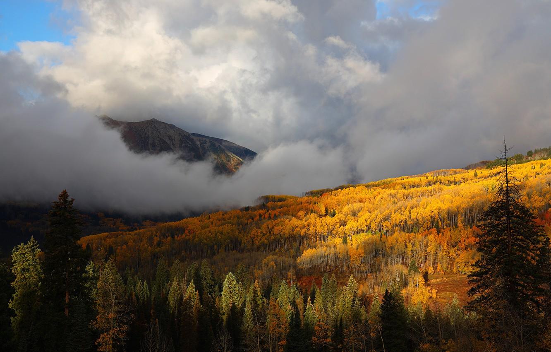 Photo wallpaper autumn, forest, trees, mountains, fog, yellow