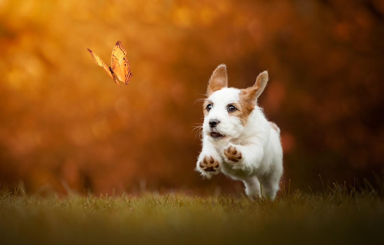 Photo wallpaper autumn, grass, look, face, flight, joy, orange, nature, pose, background, jump, butterfly, glade, dog, positive, …