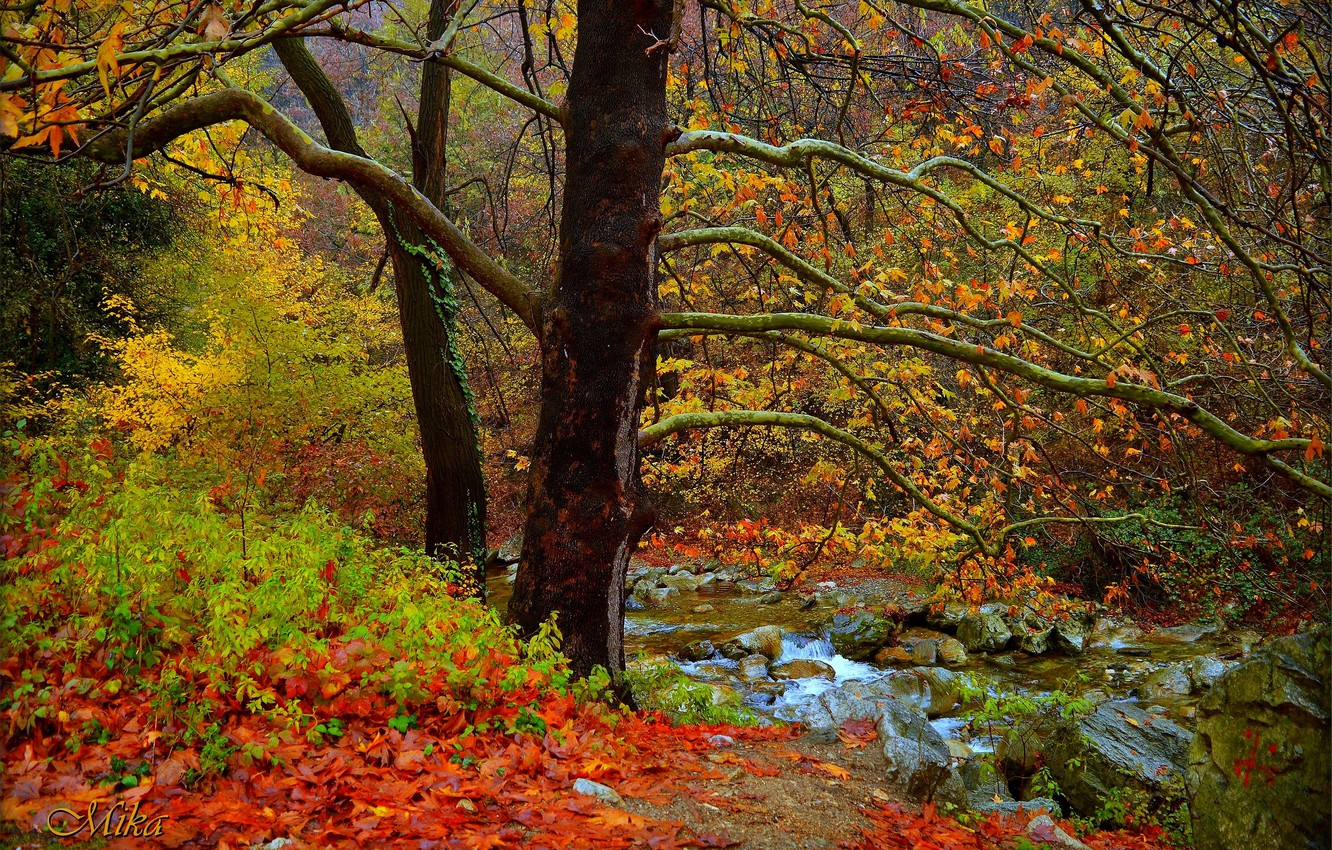 Photo wallpaper Autumn, Trees, Forest, Fall, River, Autumn, River, Forest, Tees