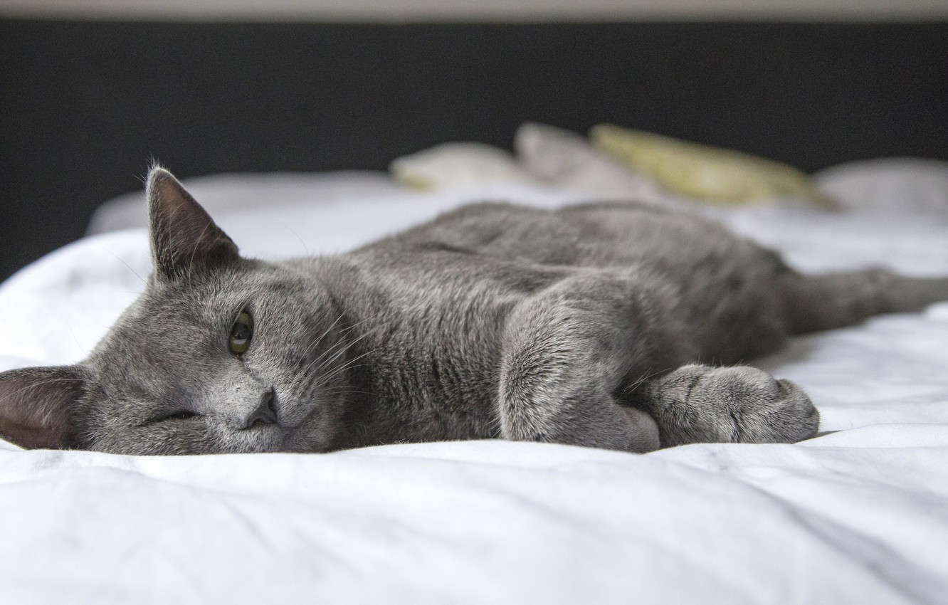 Photo wallpaper cat, sleep, look, bed, pose