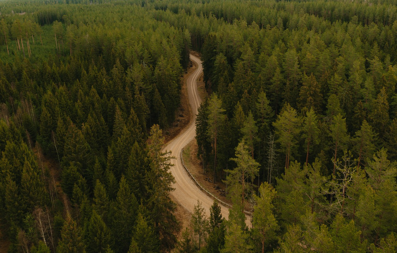 Photo wallpaper road, forest, trees, landscape, nature, the view from the top