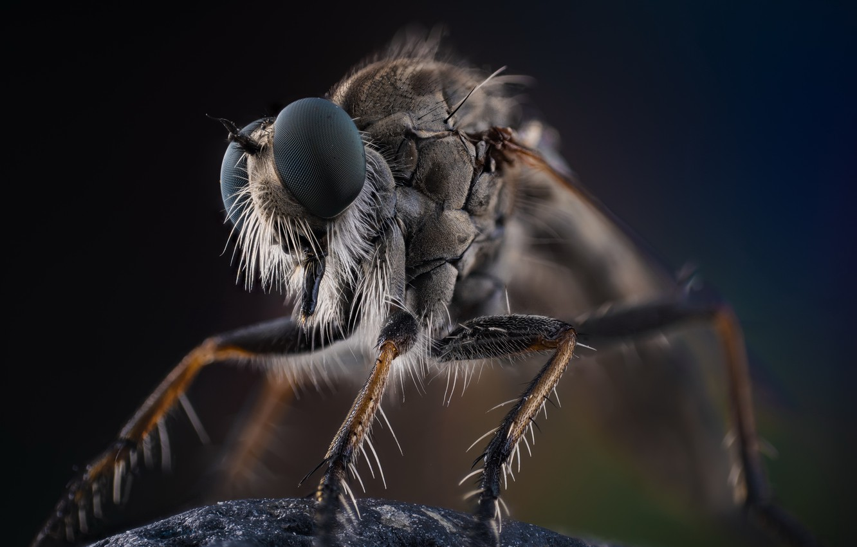 Photo wallpaper macro, nature, insect