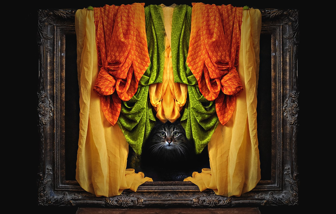 Photo wallpaper cat, cat, look, face, grey, frame, photoshop, orange, picture, matter, frame, fabric, black background, curtain, …