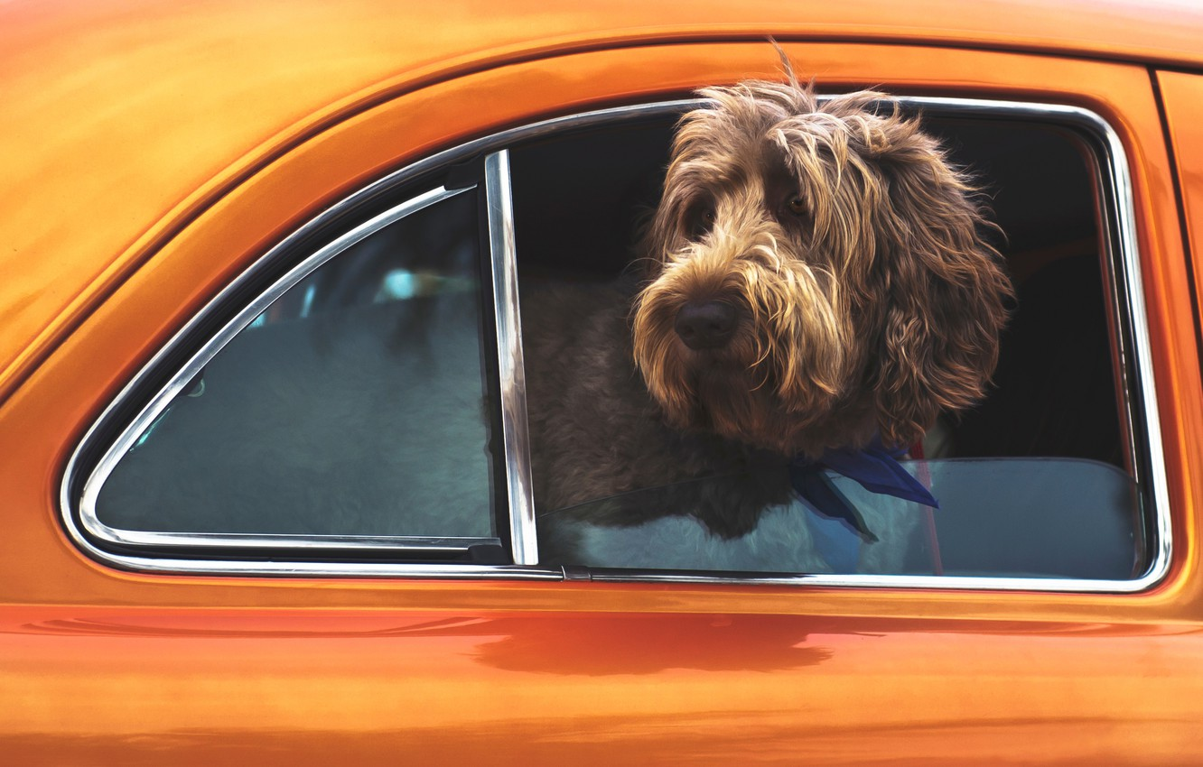 Photo wallpaper car, Dog, animal, cute, situation
