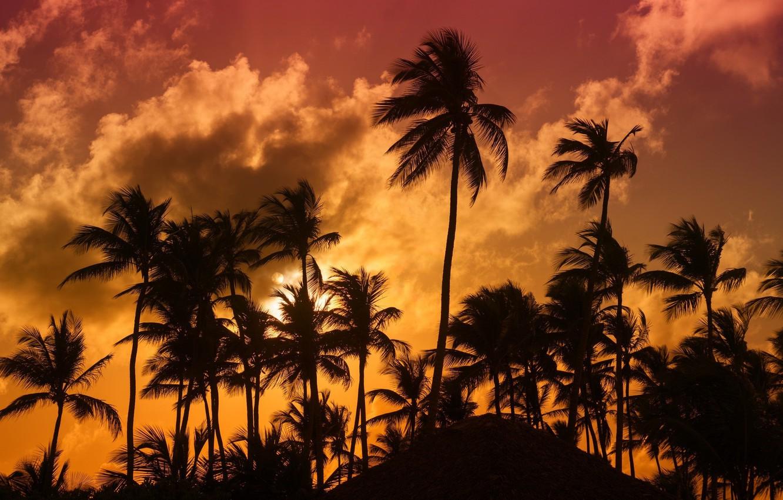Photo wallpaper tropics, palm trees, the evening