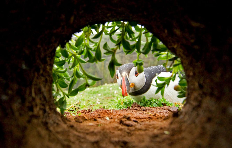 Photo wallpaper bird, beak, Nora, stalled