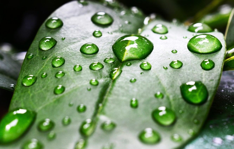 Photo wallpaper water, drops, macro, nature, water drops