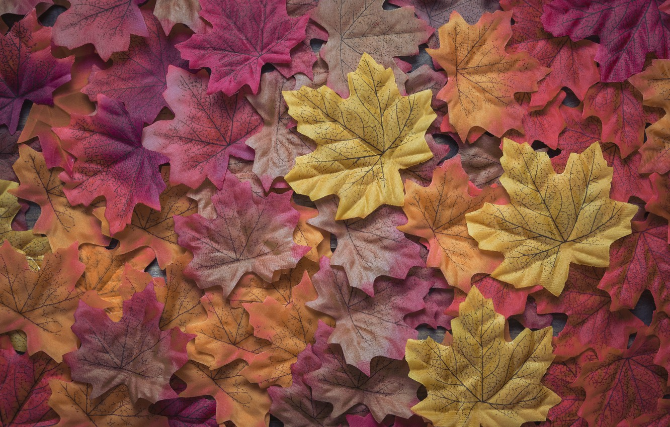 Photo wallpaper autumn, leaves, background, colorful, wood, background, autumn, leaves, autumn, maple