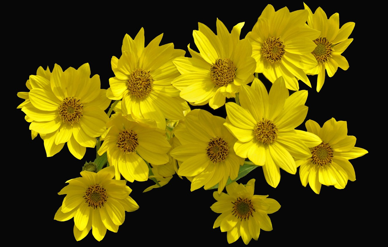 Wallpaper Flowers Black Background Yellow Flowers Images For Desktop Section Cvety Download