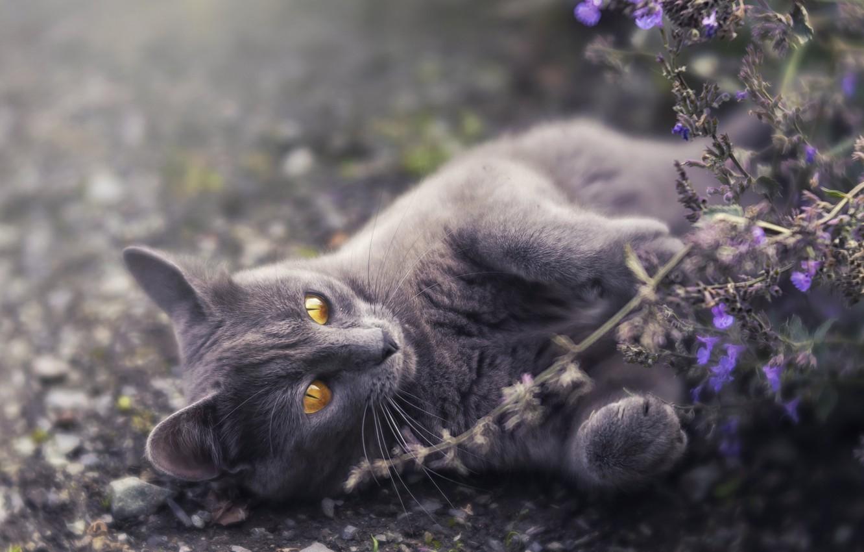 Photo wallpaper cat, flowers, nature