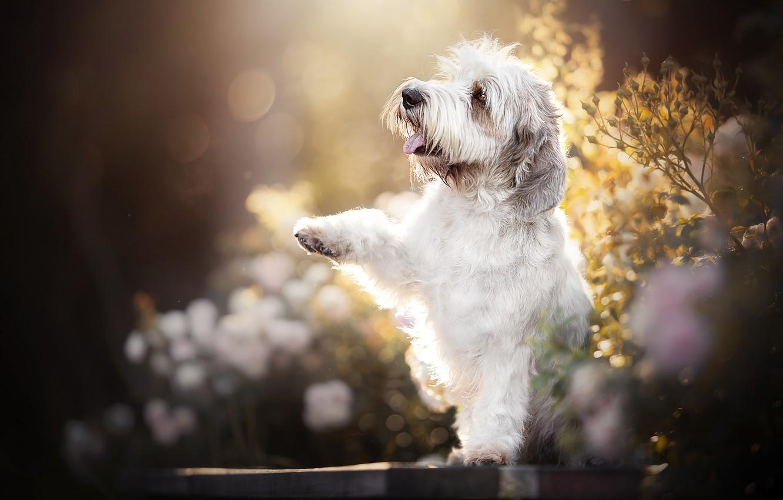 Photo wallpaper paw, dog, bokeh