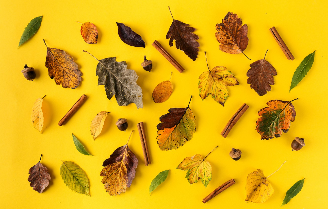 Photo wallpaper autumn, leaves, background, colorful, cinnamon, yellow, background, autumn, leaves, autumn