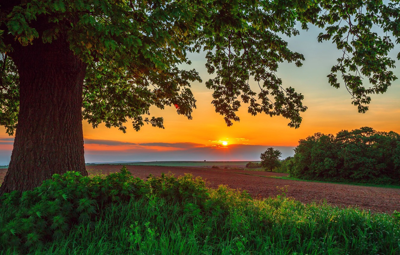 Photo wallpaper field, summer, landscape, sunset, nature, tree, grass, the bushes, Valentin Valkov