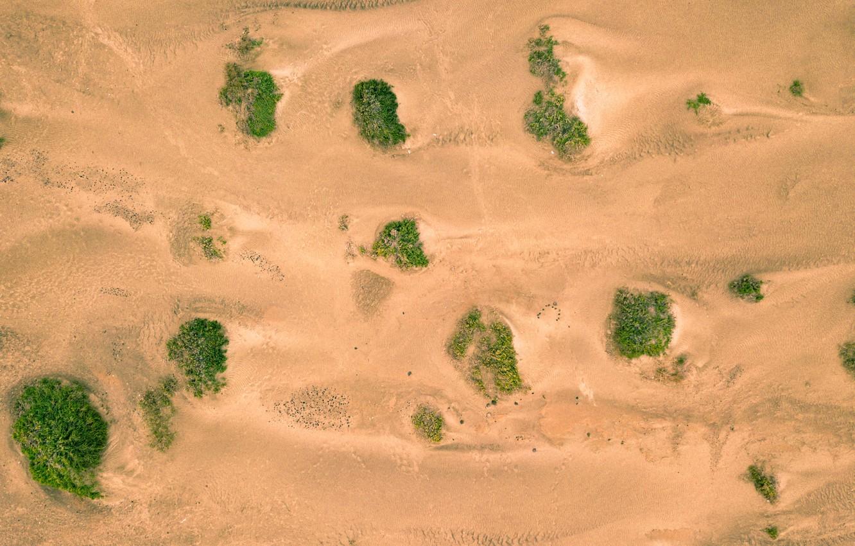 Photo wallpaper sand, greens, vegetation, desert